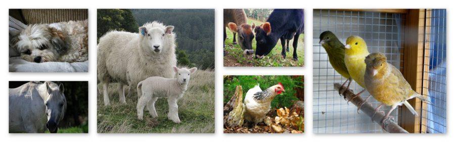 vet-health-centre-animals